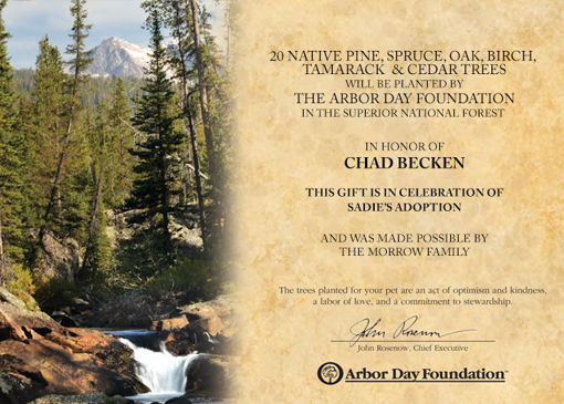 Trees in Celebration Certificate - Pets