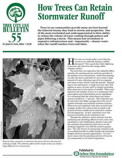 #55: How Trees Can Retain Stormwater Runoff