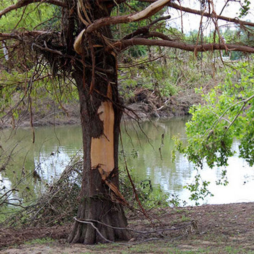 Picture of Texas Flooding Tree Recovery