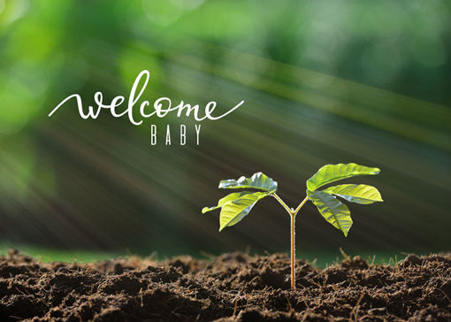 Picture of Welcome Baby