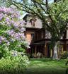 Fragrant Lilac - Syringa vulgaris