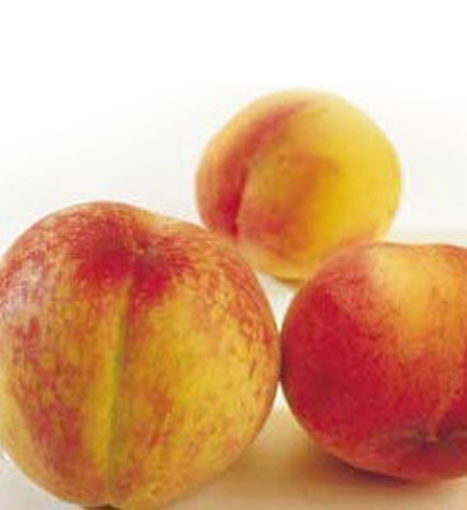 Hale-Haven Peach - Prunus persica