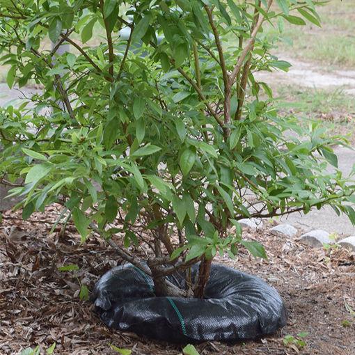 "18"" Tree Diaper"