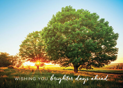 Picture of Wishing You Brighter Days