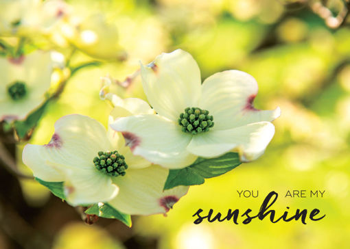 Picture of My Sunshine-Flowers
