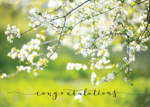 Picture of Congratulations-Flowering Tree