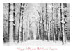 Picture of Forest of Snow