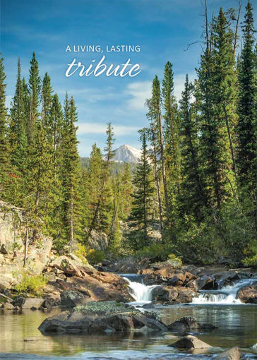Picture of Wallowa-Whitman National Forest: Trees in Memory Card
