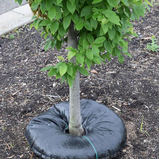 "24"" Tree Diaper"
