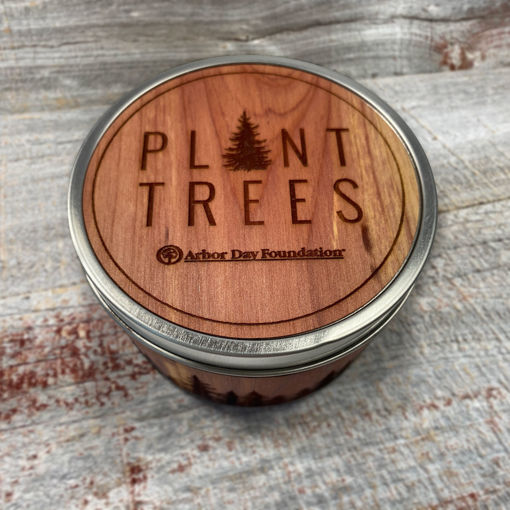 Picture of Plant Trees Wood Wrapped Candle