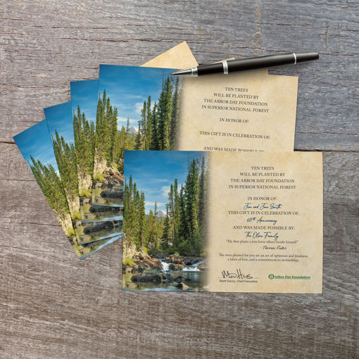 Picture of Trees in Celebration Blank Honoree Certificates-5 Pack