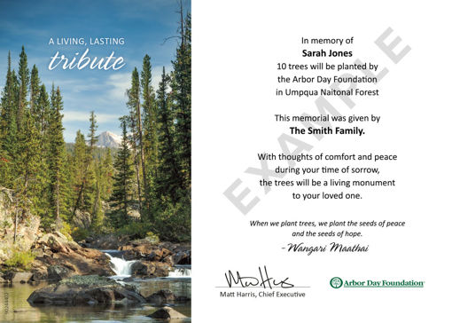 Picture of Umpqua National Forest: Trees in Memory e-Certificate