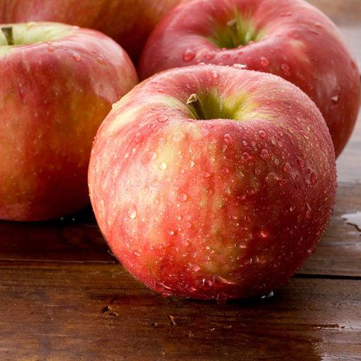 Picture of Honeycrisp Apple