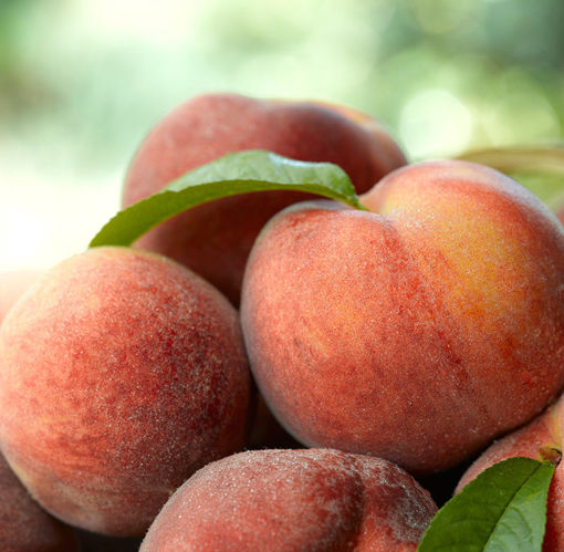 Picture of Country Sweet Peach