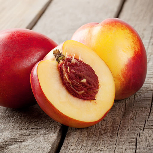 Picture of Rose Princess Nectarine
