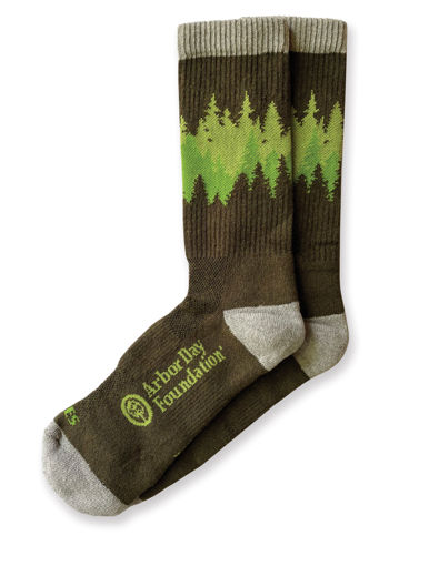 Picture of Into the Forest Socks